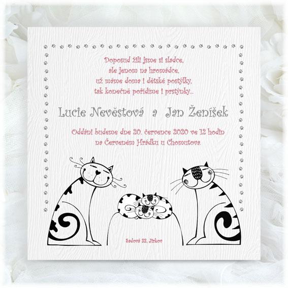 Svatební oznámení kočky